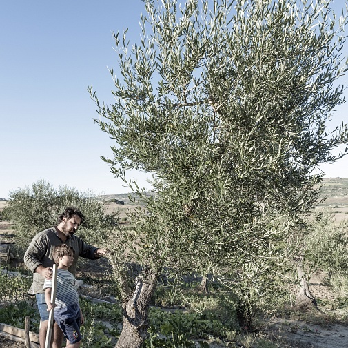 IN TIME. FAMILY OLIVE TREE